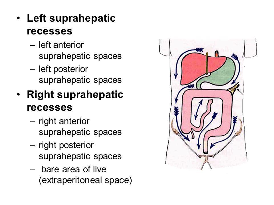 Left suprahepatic recesses