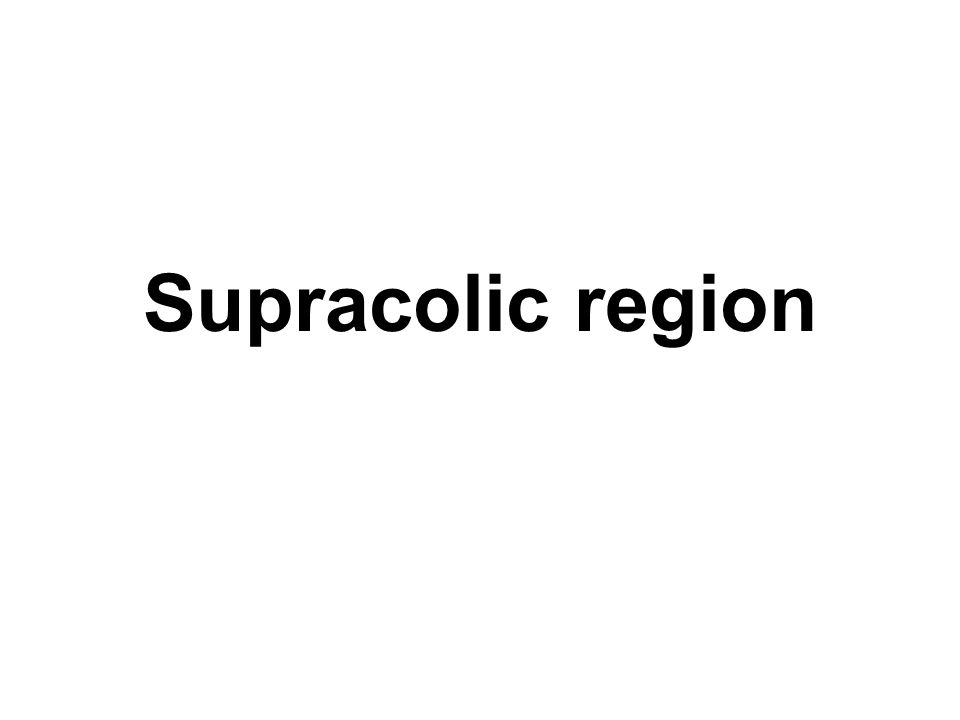 Supracolic region
