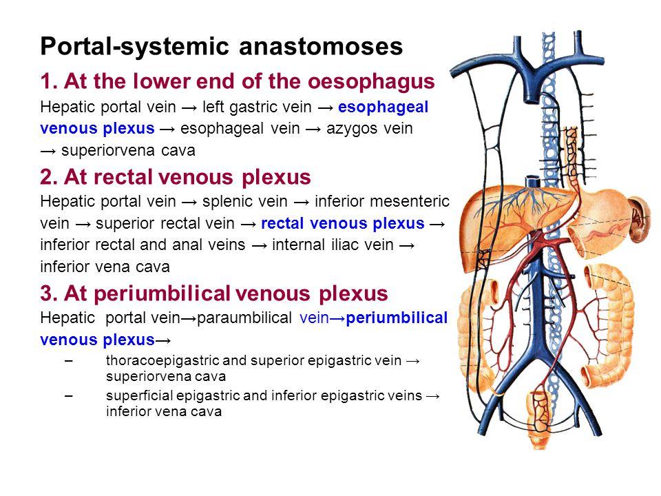 Portal-systemic anastomoses