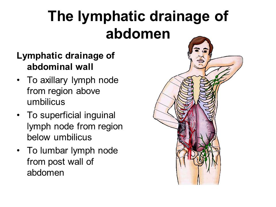 The lymphatic drainage of abdomen