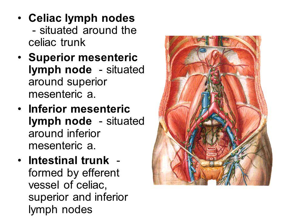 Celiac Lymph Nodes