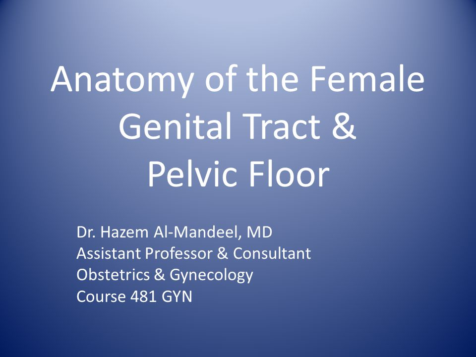 Anatomy of the Female Genital Tract & Pelvic Floor