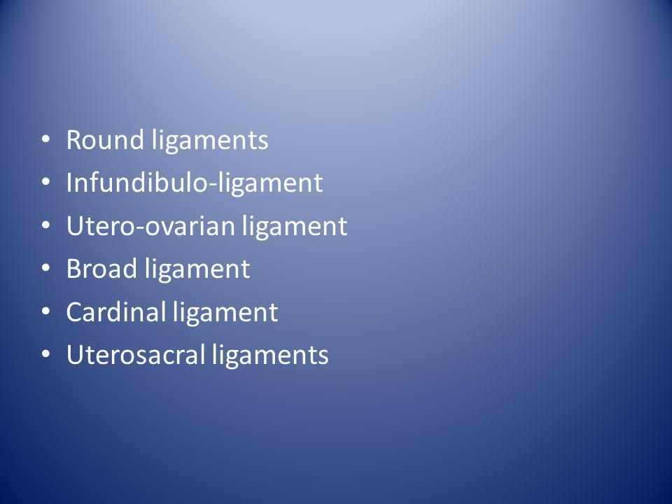 Ligaments Round ligaments Infundibulo-ligament Utero-ovarian ligament