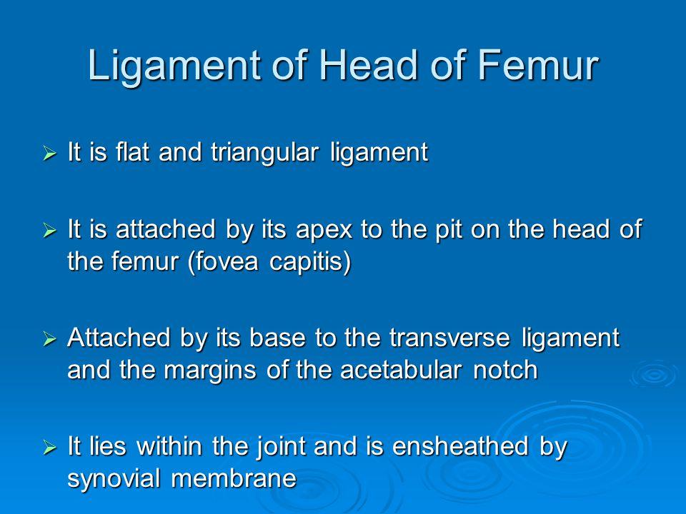 Ligament of Head of Femur