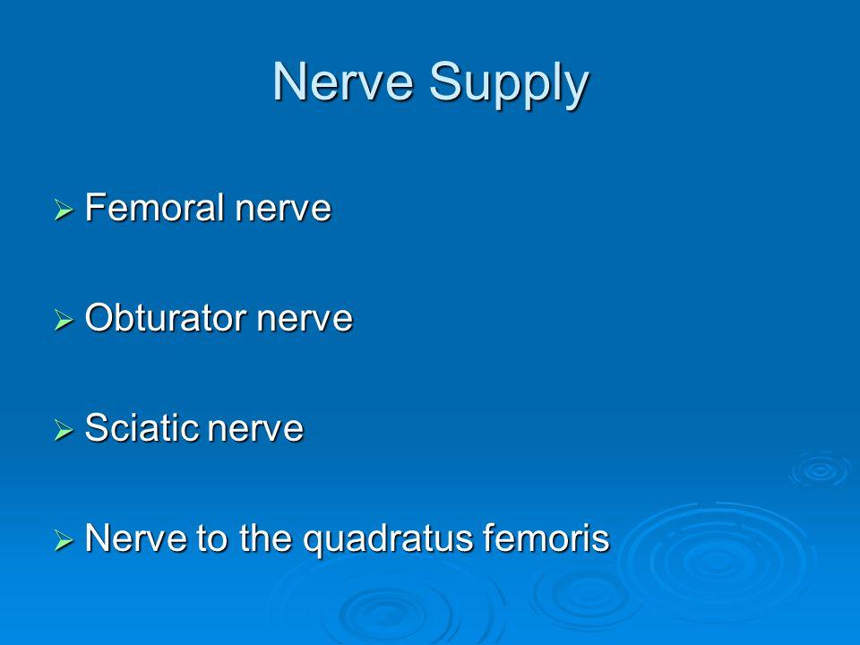 Nerve Supply Femoral nerve Obturator nerve Sciatic nerve