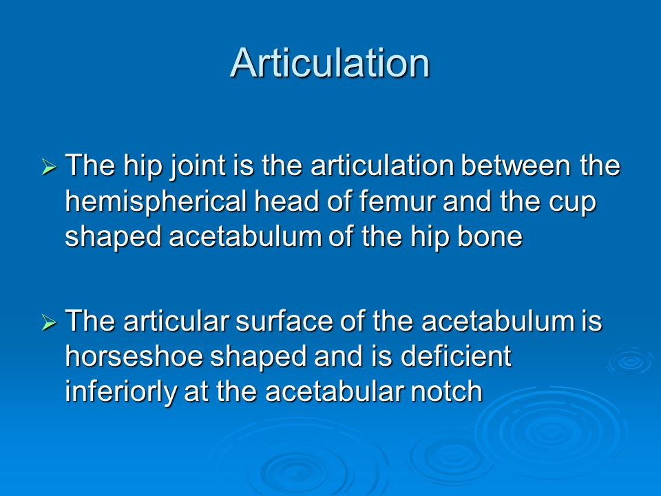 Articulation The hip joint is the articulation between the hemispherical head of femur and the cup shaped acetabulum of the hip bone.