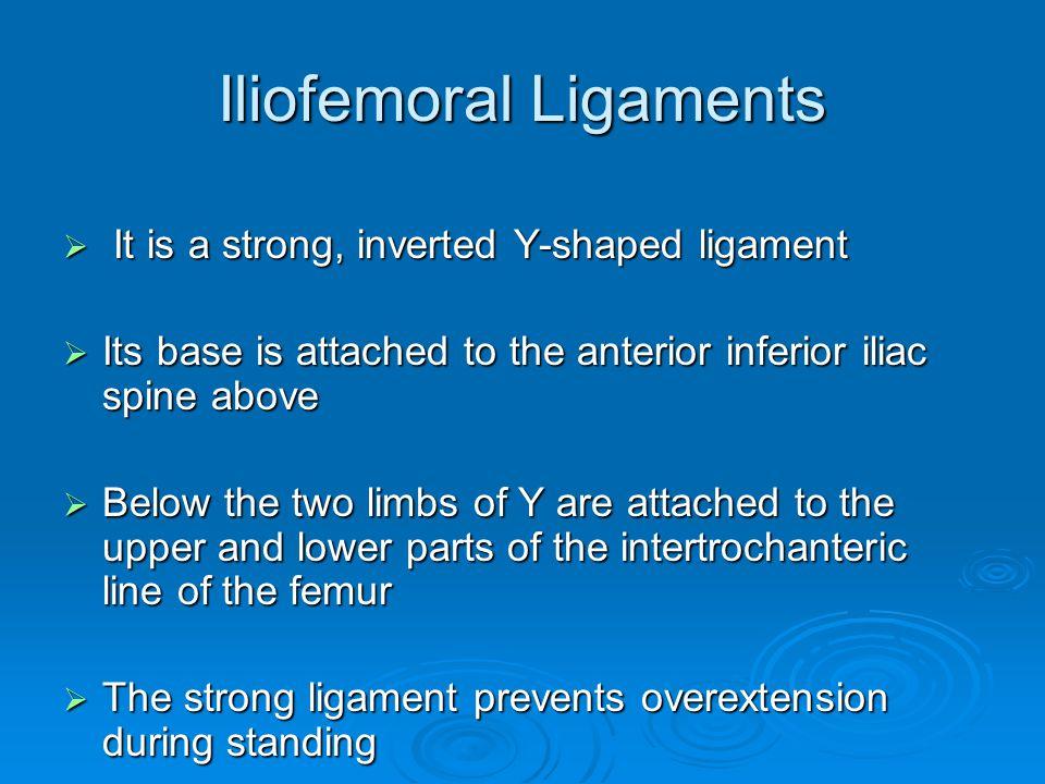 Iliofemoral Ligaments
