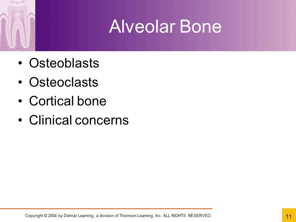 Alveolar Bone Osteoblasts Osteoclasts Cortical bone Clinical concerns
