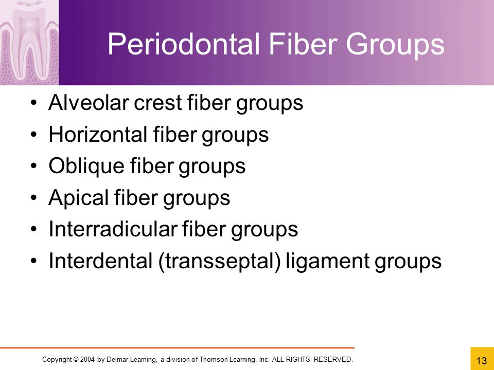Periodontal Fiber Groups