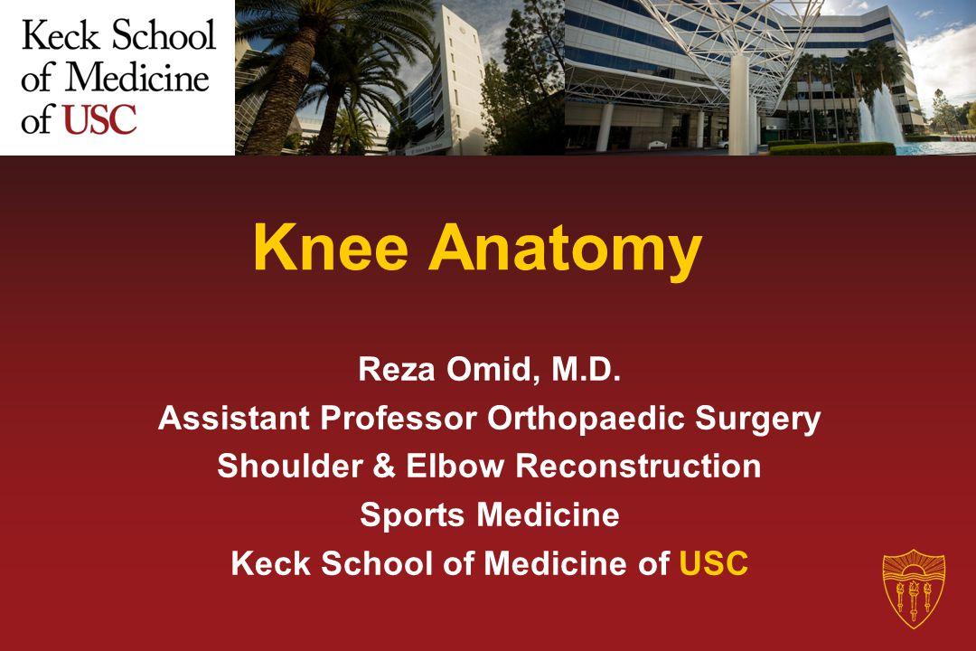 Knee Anatomy Reza Omid, M.D. Assistant Professor Orthopaedic Surgery
