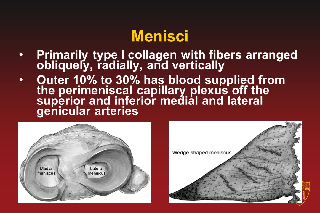Menisci Primarily type I collagen with fibers arranged obliquely, radially, and vertically.