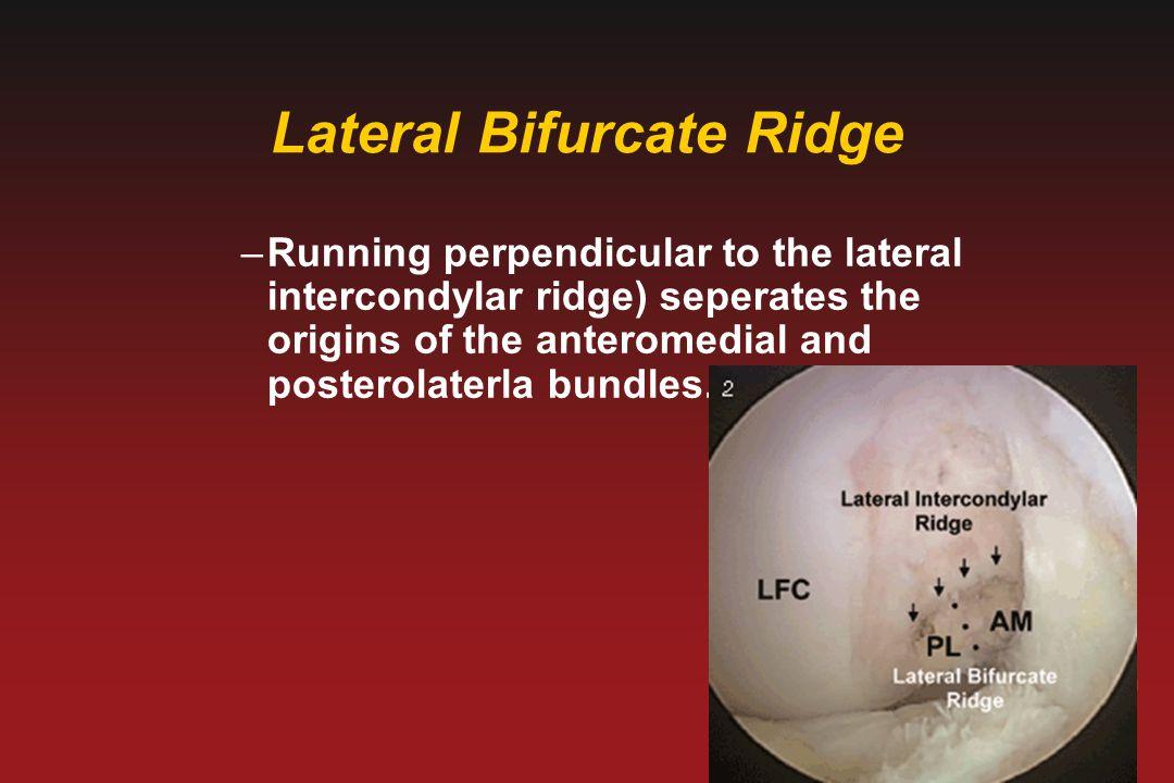 Lateral Bifurcate Ridge