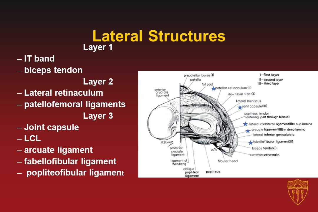 Lateral Structures Layer 1 IT band biceps tendon Layer 2
