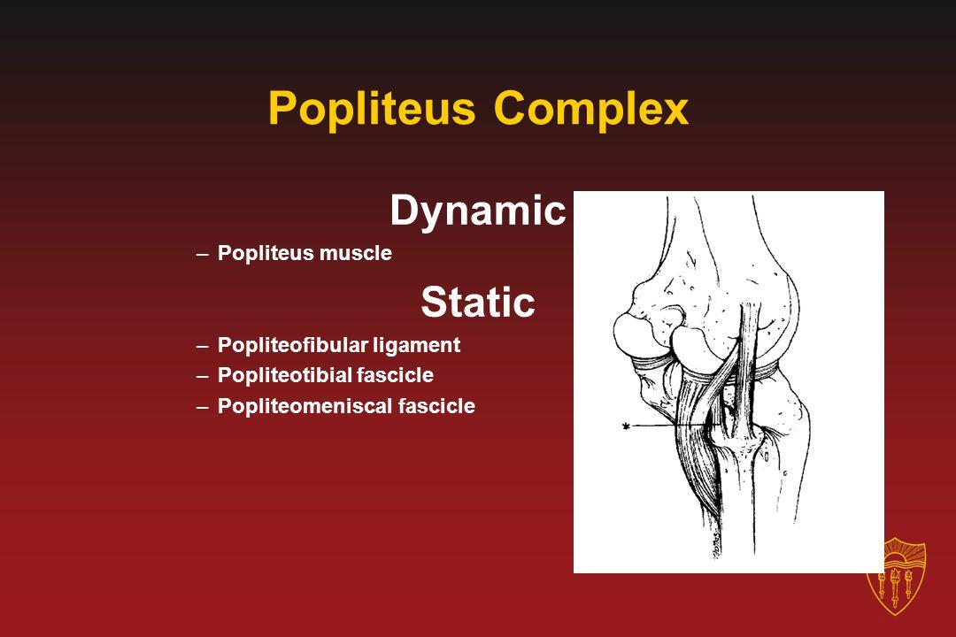 Popliteus Complex Dynamic Static Popliteus muscle
