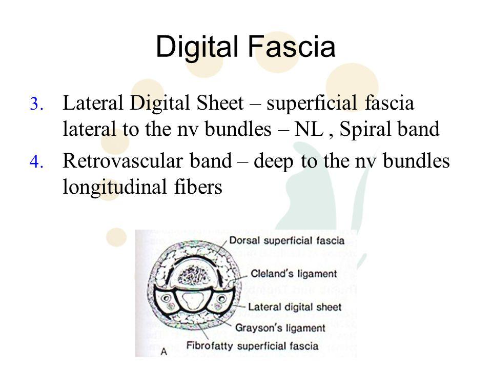 Digital Fascia