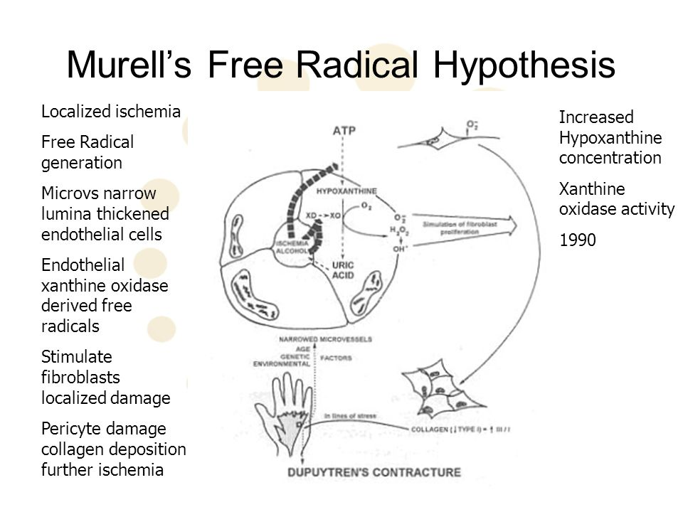 Murell's Free Radical Hypothesis