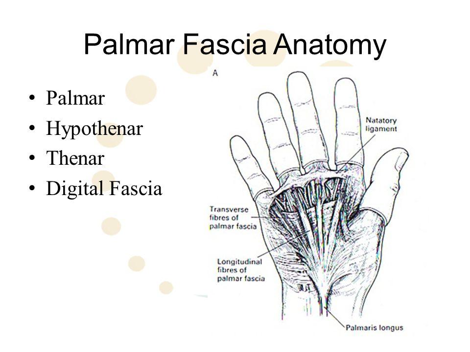 Palmar Fascia Anatomy Palmar Aponeurosis Hypothenar Aponeurosis