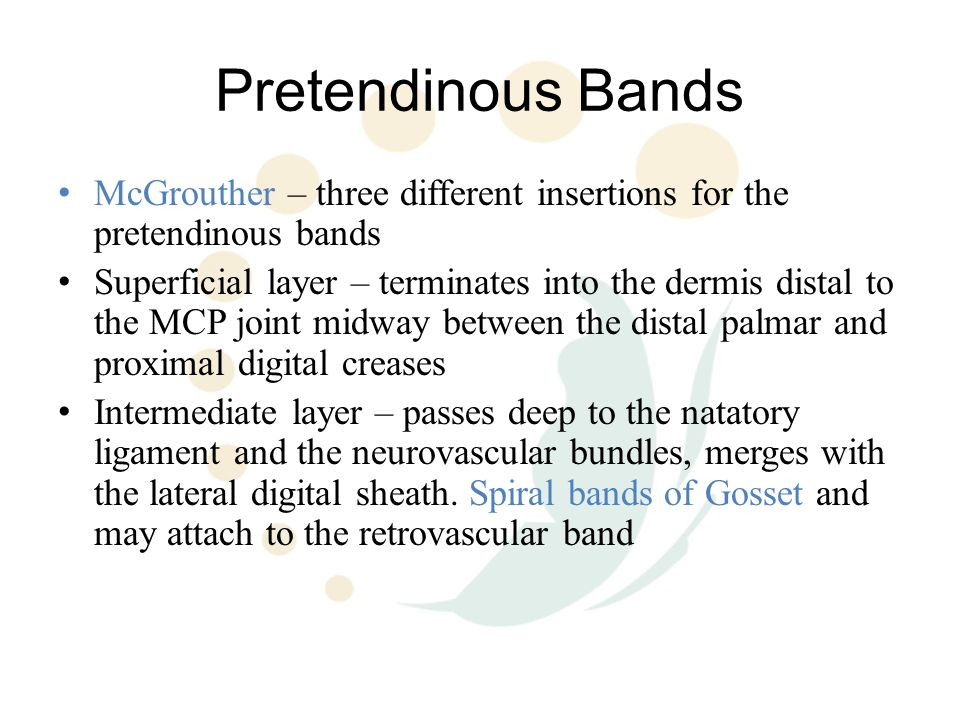 Pretendinous Bands McGrouther – three different insertions for the pretendinous bands.