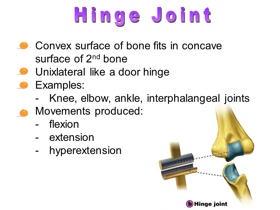 Hinge Joint Convex surface of bone fits in concave surface of 2nd bone