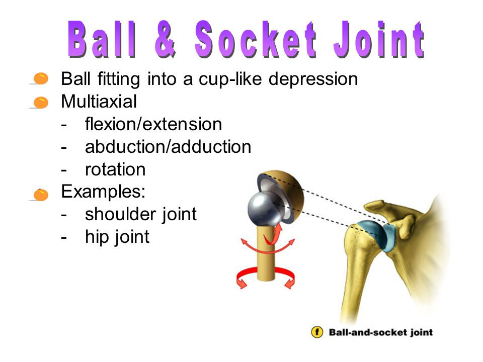 Ball & Socket Joint Ball fitting into a cup-like depression Multiaxial