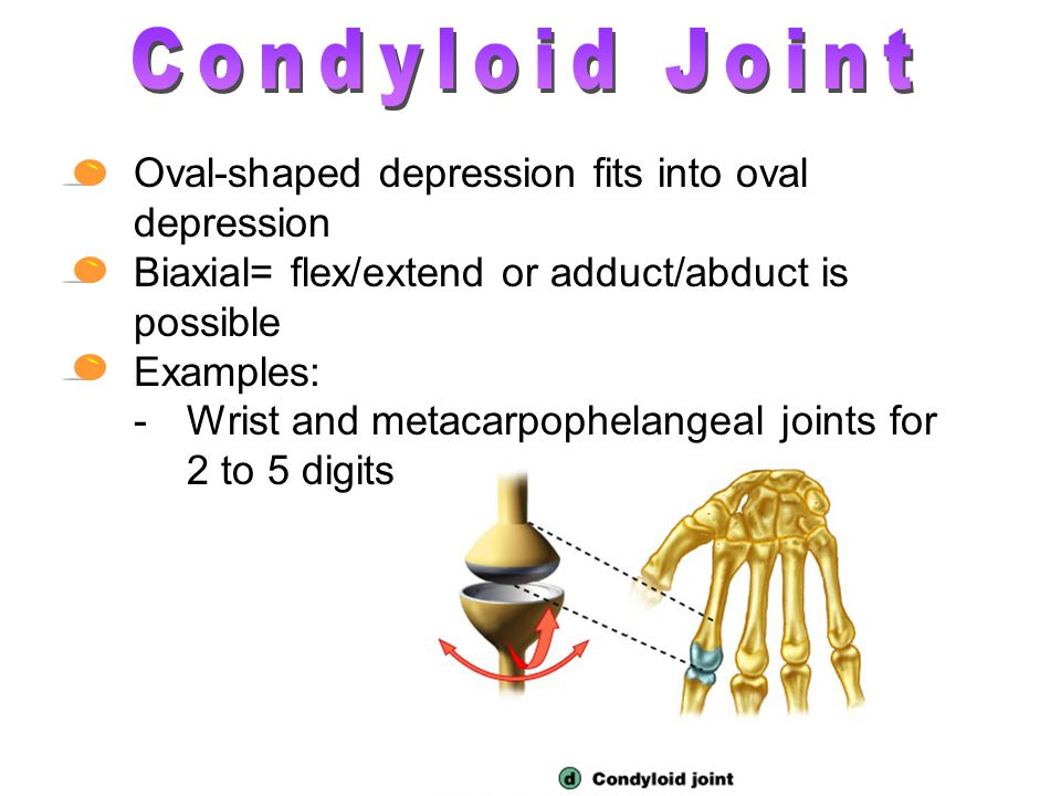 Condyloid Joint Oval-shaped depression fits into oval depression