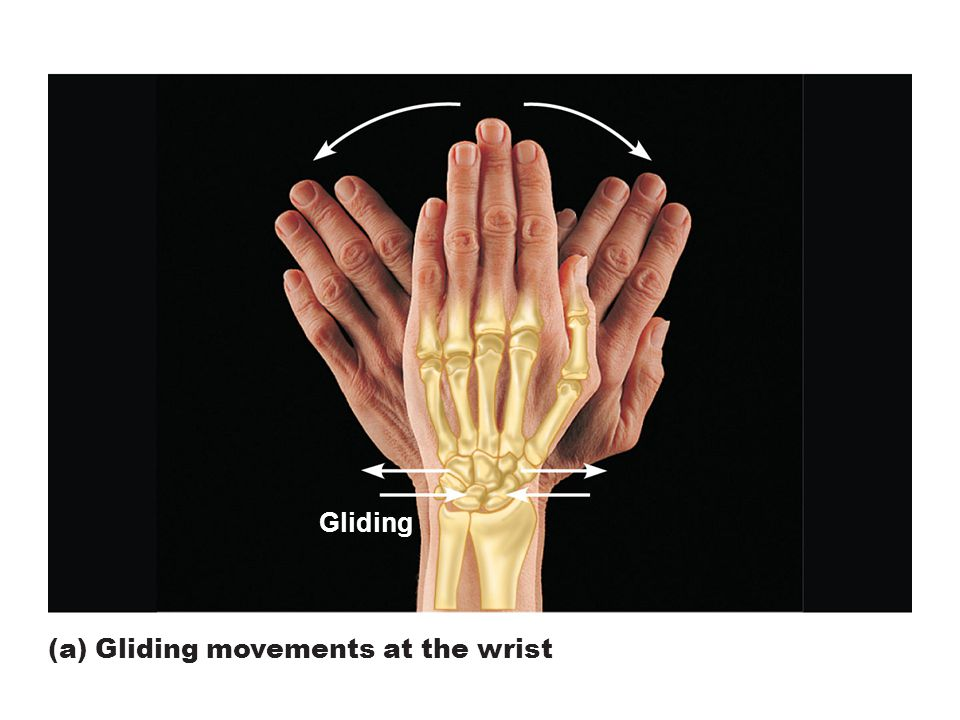 Figure 8.5a Movements allowed by synovial joints.