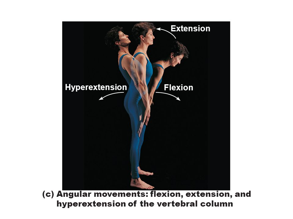 Figure 8.5c Movements allowed by synovial joints.