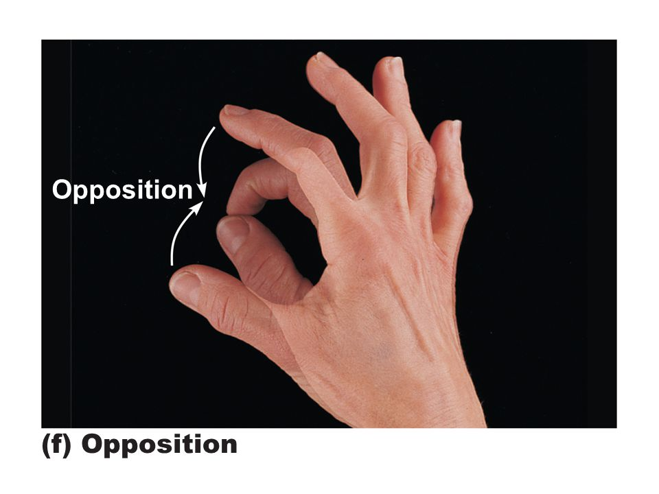Opposition in anatomy