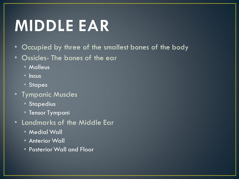 MIDDLE EAR Occupied by three of the smallest bones of the body