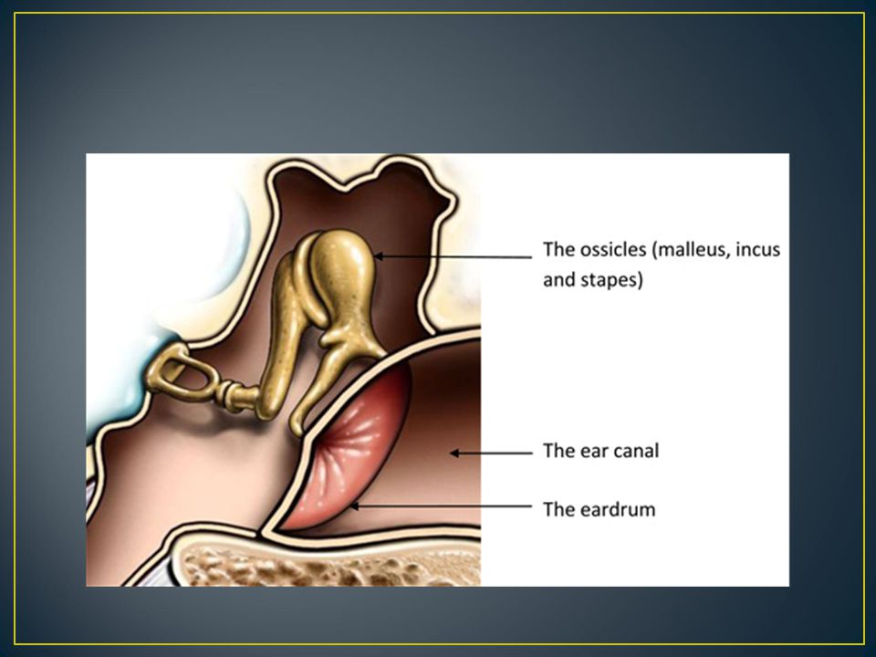 Middle ear or tympanic cavity is a box
