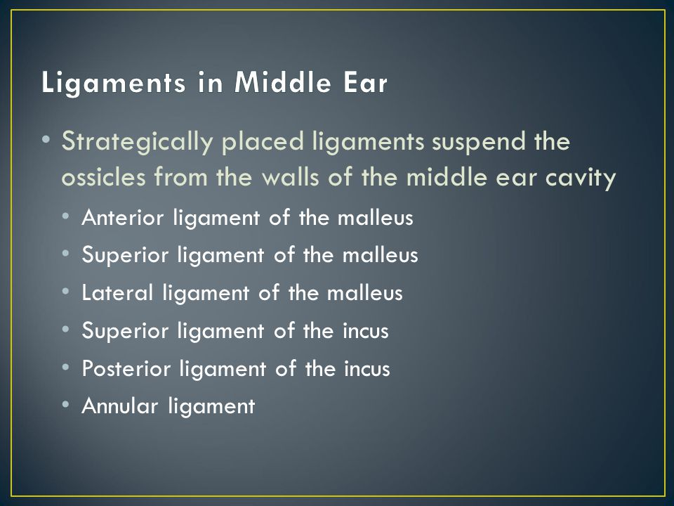 Ligaments in Middle Ear
