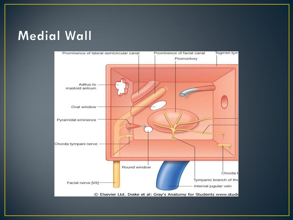 Medial Wall Middle ear or tympanic cavity is a box- Air filled cavity