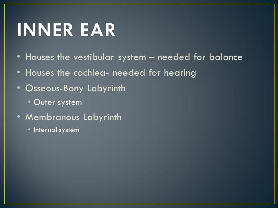 INNER EAR Houses the vestibular system – needed for balance