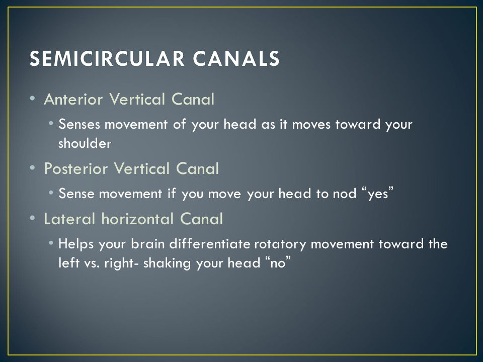 SEMICIRCULAR CANALS Anterior Vertical Canal Posterior Vertical Canal