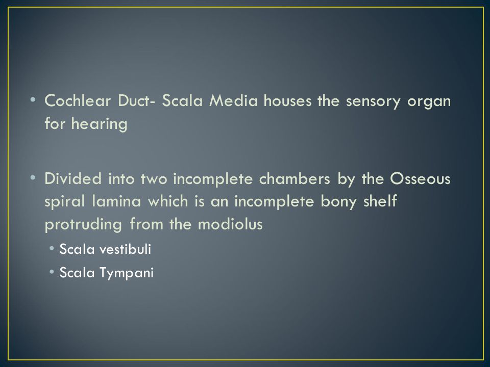 Cochlear Duct- Scala Media houses the sensory organ for hearing