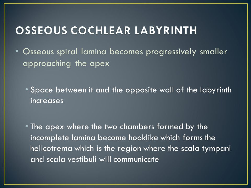 OSSEOUS COCHLEAR LABYRINTH