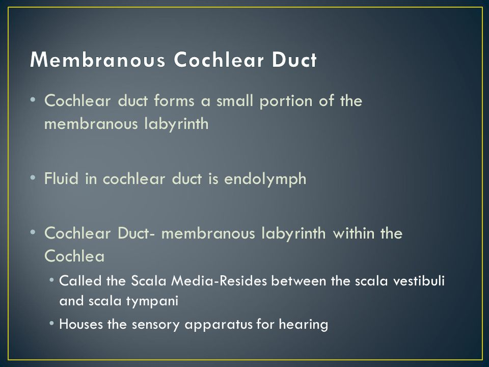 Membranous Cochlear Duct
