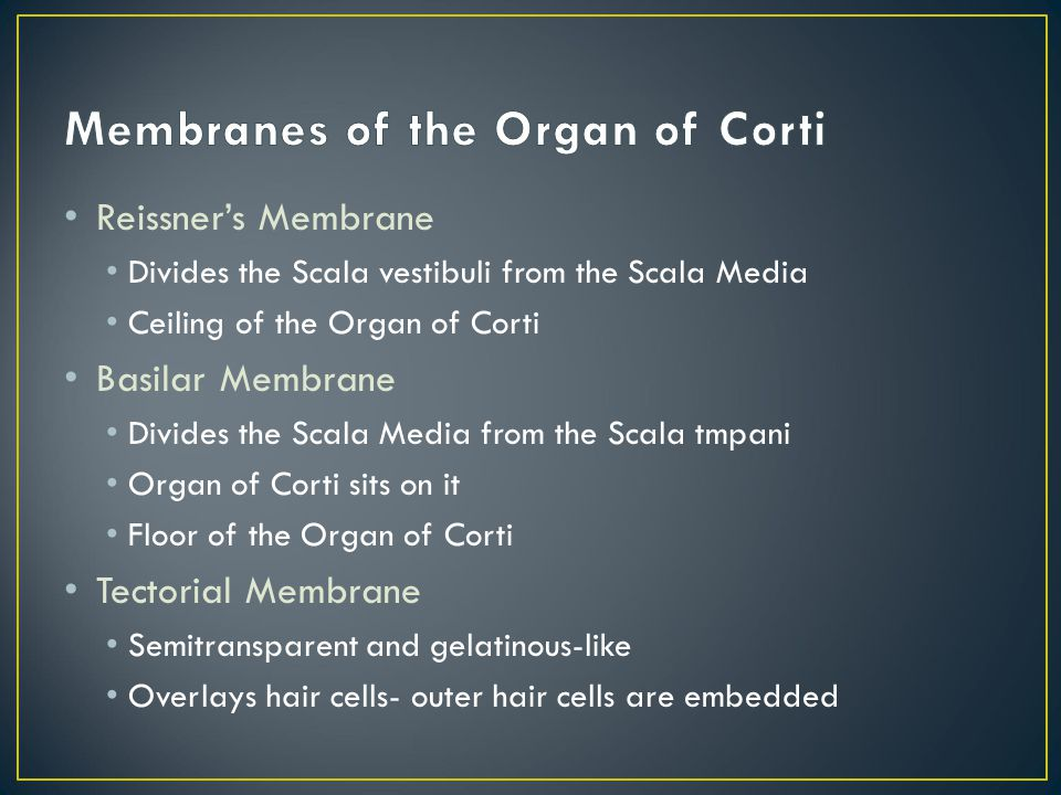Membranes of the Organ of Corti