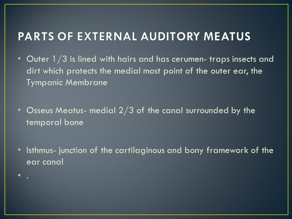 PARTS OF EXTERNAL AUDITORY MEATUS