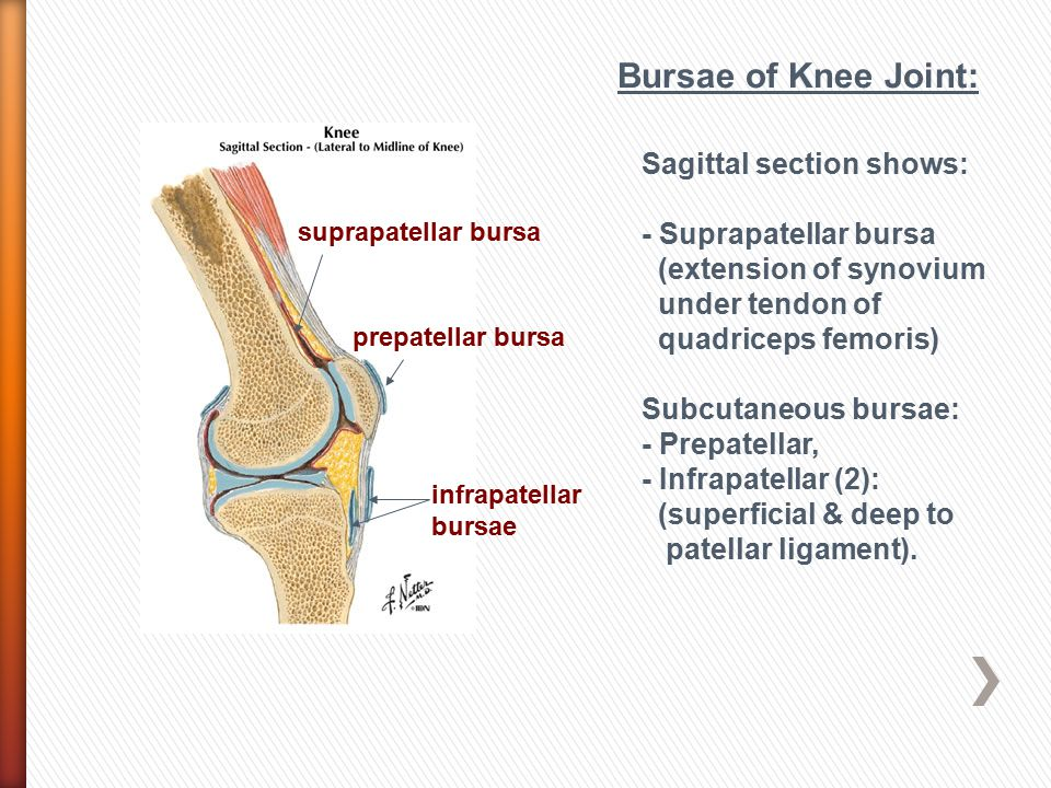 Bursae of Knee Joint: Sagittal section shows: - Suprapatellar bursa