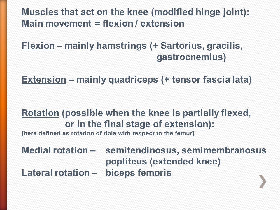 Muscles that act on the knee (modified hinge joint):