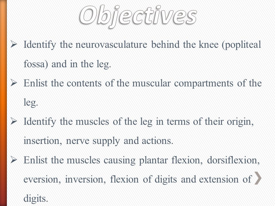 Objectives Identify the neurovasculature behind the knee (popliteal fossa) and in the leg.