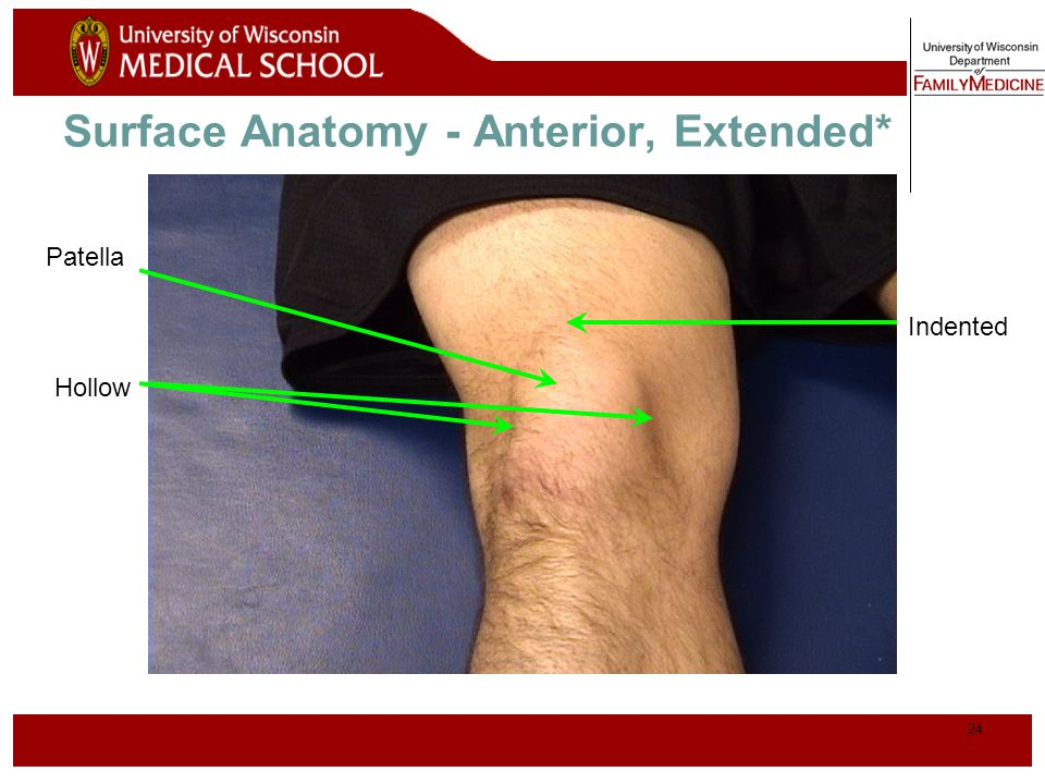Surface Anatomy - Anterior, Extended*