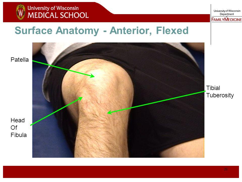 Surface Anatomy - Anterior, Flexed