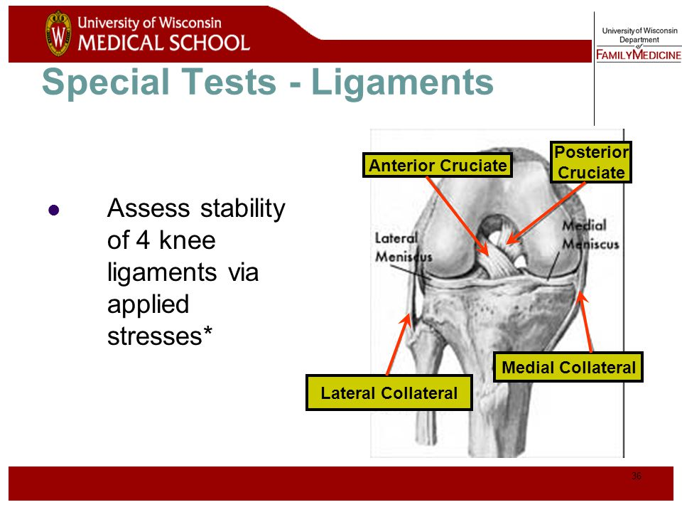 Special Tests - Ligaments