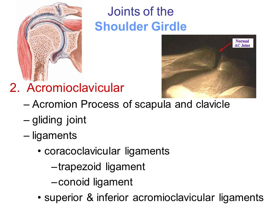 Joints of the Shoulder Girdle