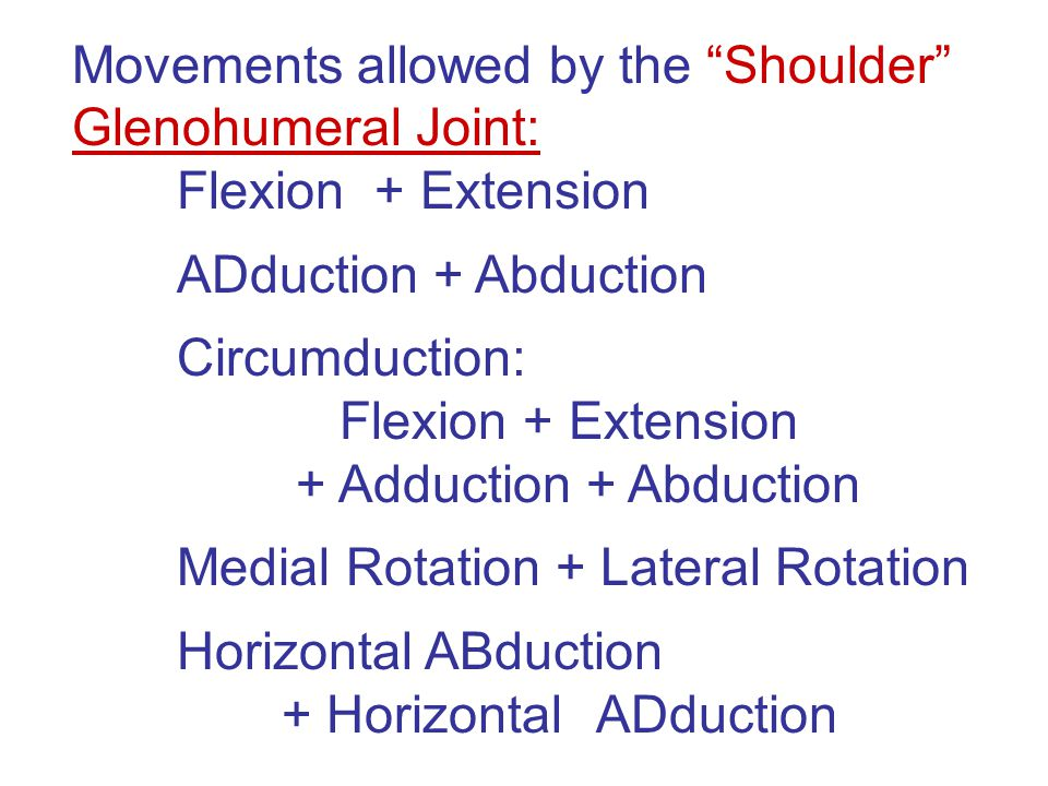 Movements allowed by the Shoulder