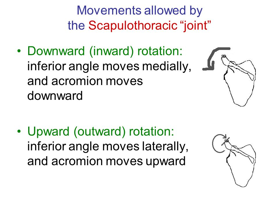 Movements allowed by the Scapulothoracic joint
