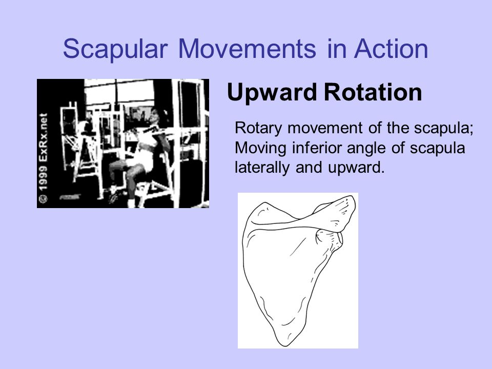 Scapular Movements in Action