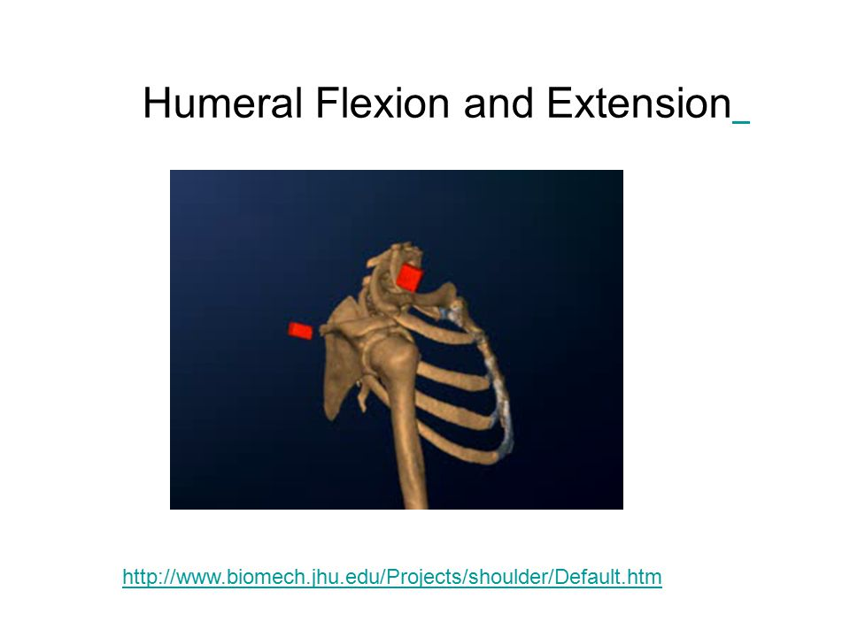 Humeral Flexion and Extension